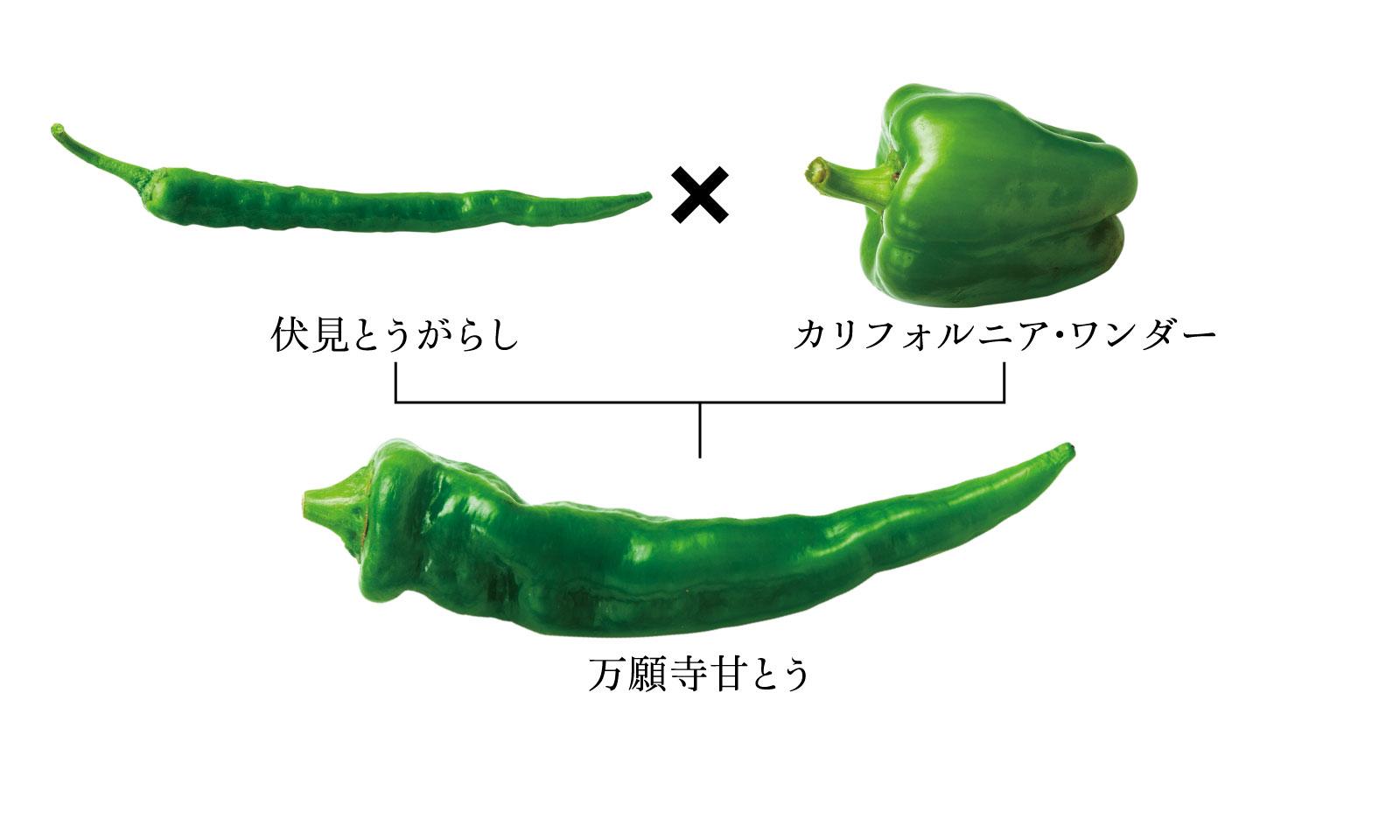 図版画像:伏見×カリフォルニアワンダー